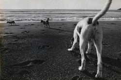 作品画像:犬