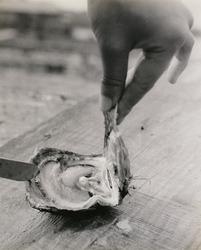 作品画像:真珠をとり出す