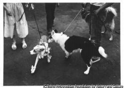 作品画像:ペットショーでの2匹の犬