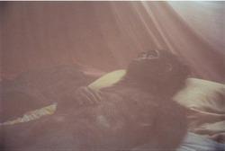 作品画像:Nabua Monkey, 2008