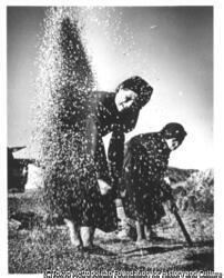 穀物のふるい分け