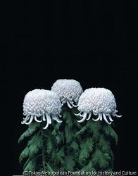 作品画像:菊