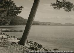 作品画像:(松の木と水面)