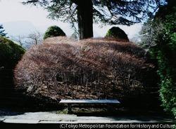 作品画像:強羅公園、箱根