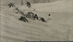 作品画像:雪折笹