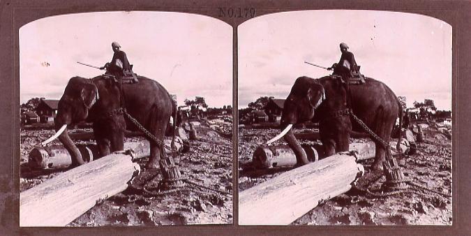 作品画像:チーク材を運ぶ象(No.179)