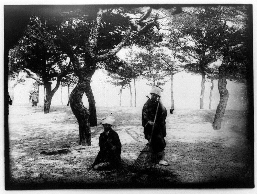 作品画像:松林の下を掃く女性2人
