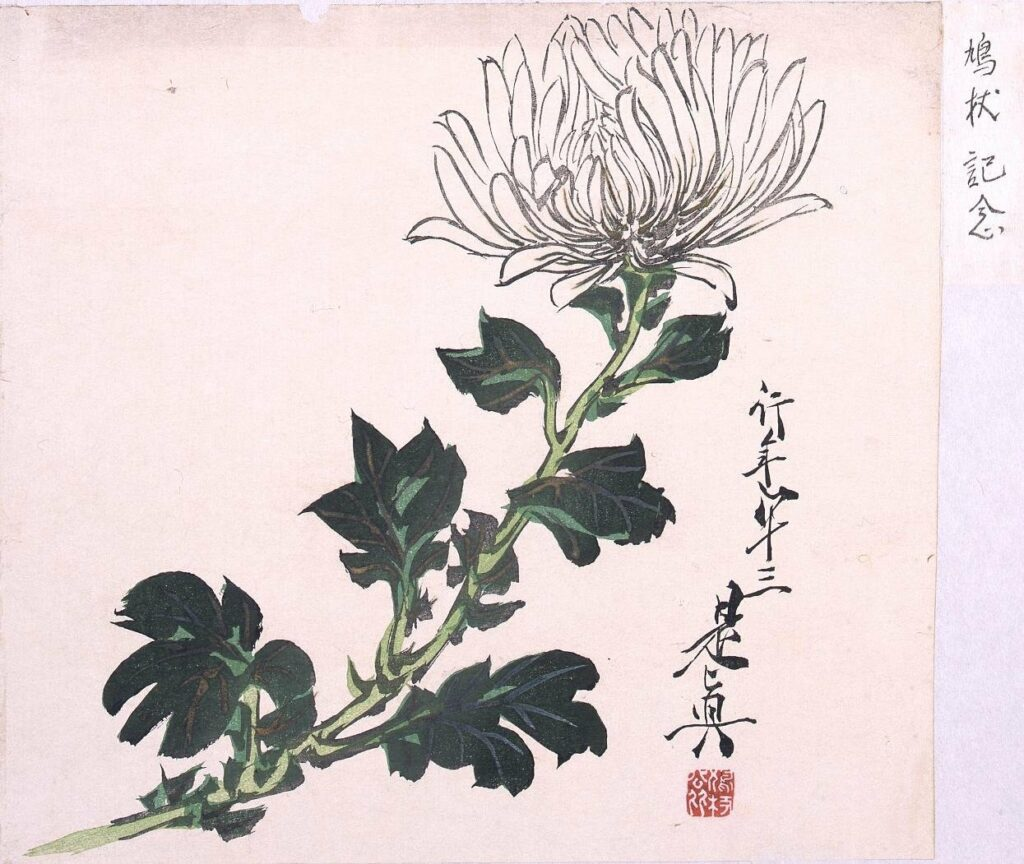 作品画像:多色刷 白菊(鳩杖紀念)