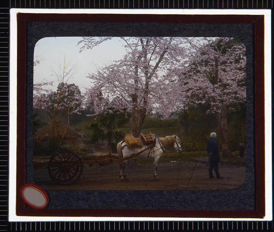 作品画像:桜と荷馬車(幻燈原板)