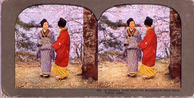 作品画像:A Morning strollAmid the Blossoms in Norji Park,Tokyo,Japan.607