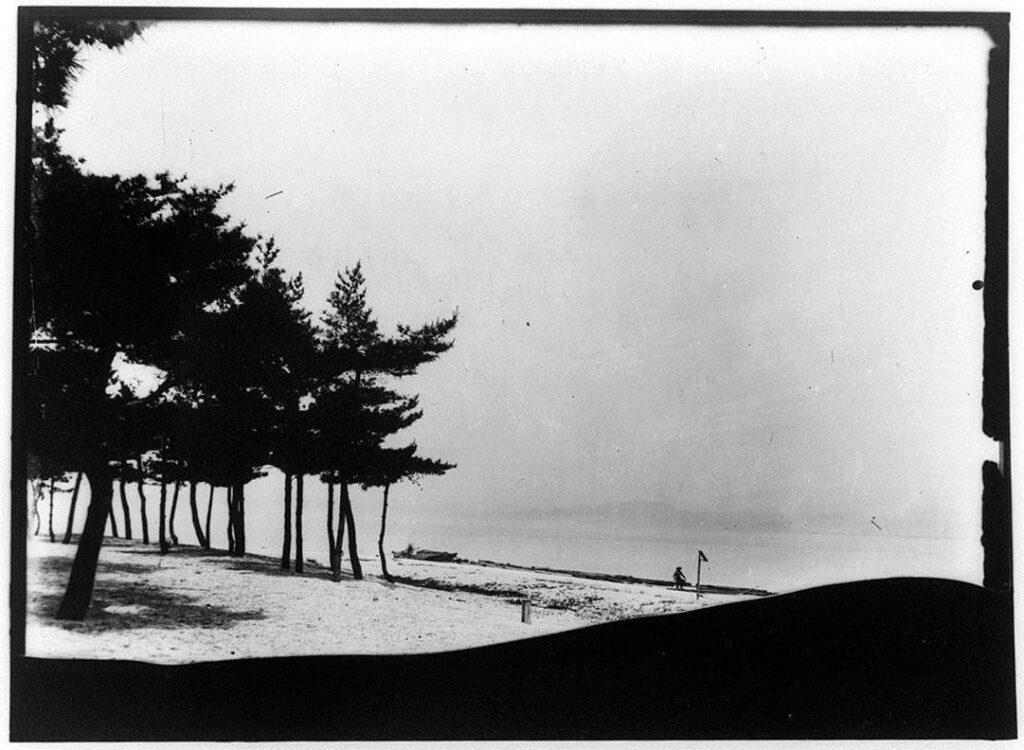 作品画像:水辺の松