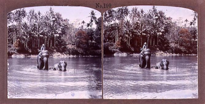 作品画像:セイロンの象の水浴(No.199)