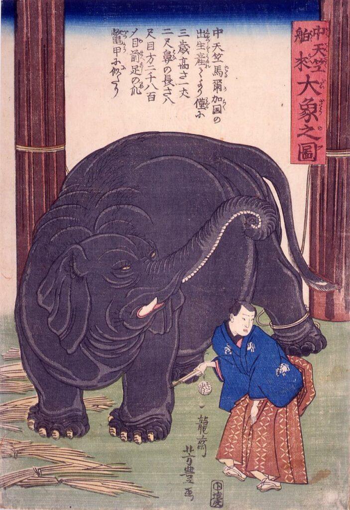 作品画像:中天竺舶来大象之図
