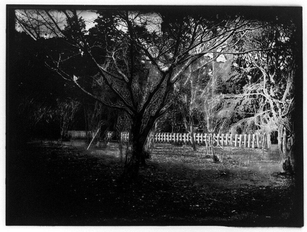 作品画像:木々と柵