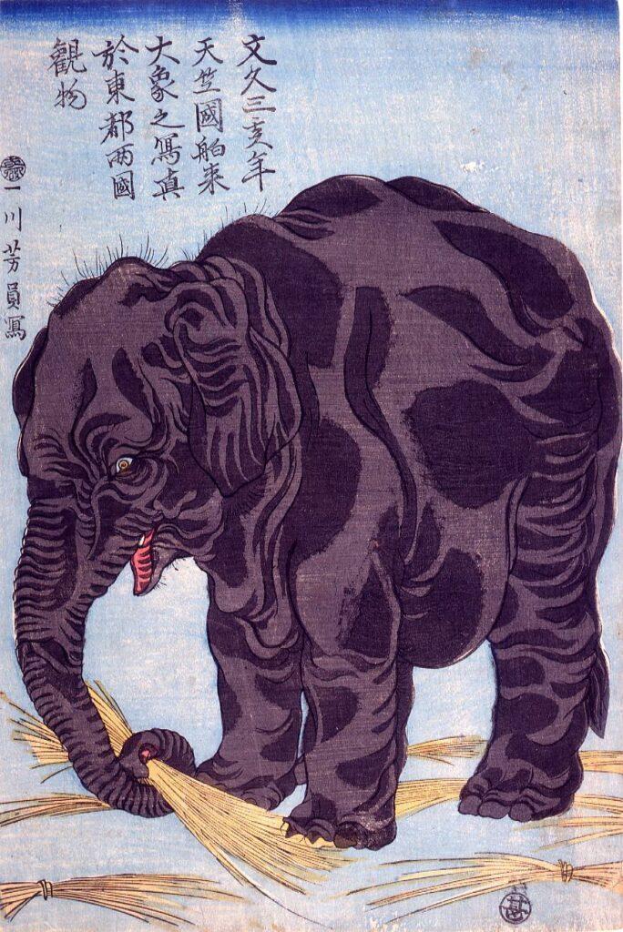 作品画像:文久三亥年天竺国舶来大象之写真於東都両国観物