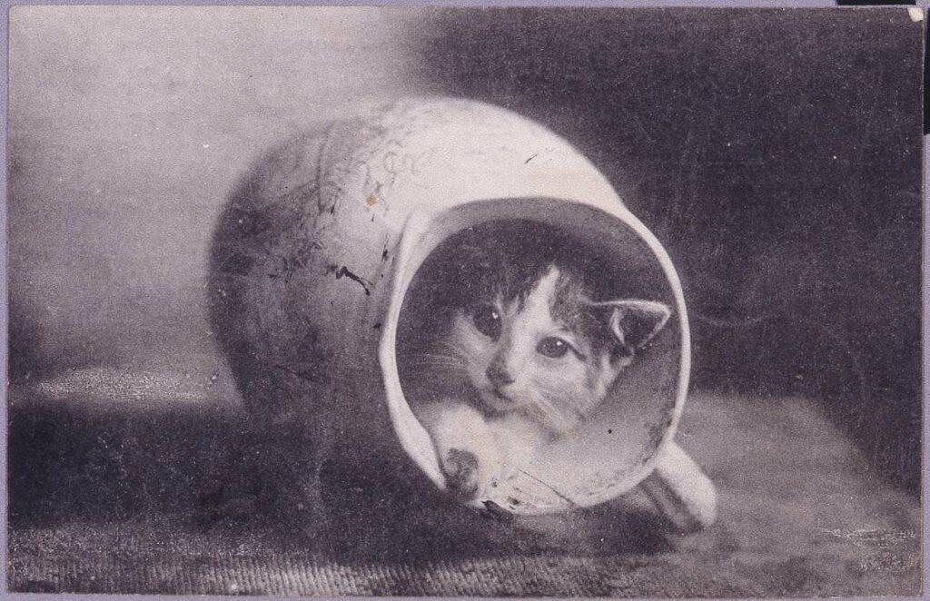 作品画像:水差しに隠れた猫