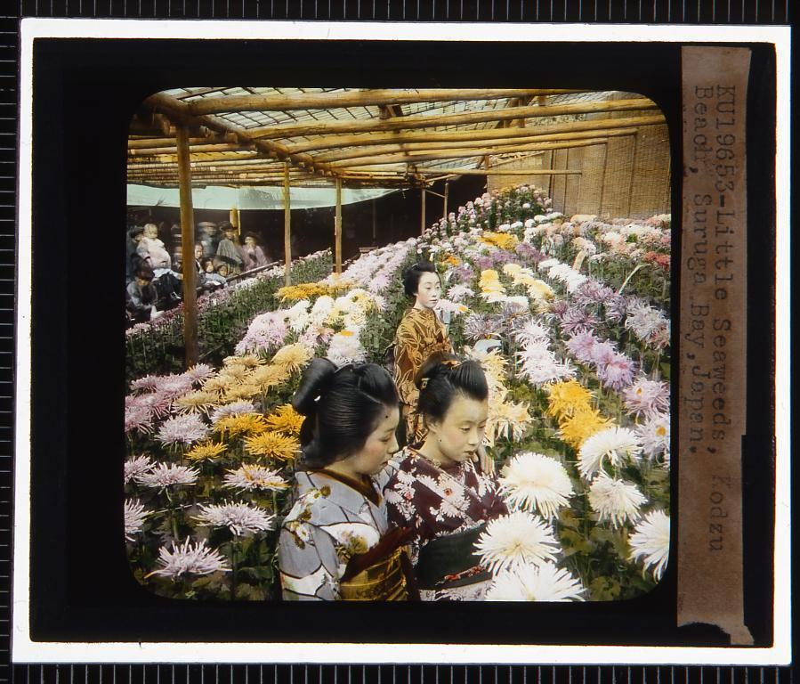 作品画像:菊と女性(幻燈原板)