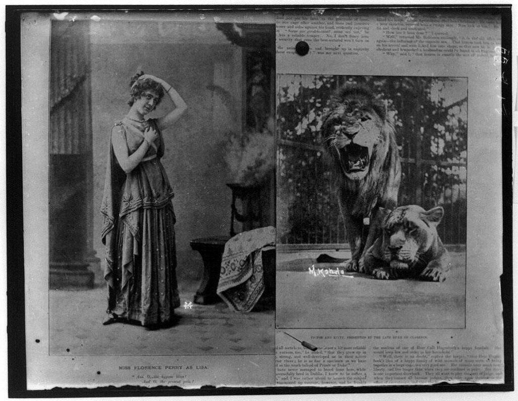 作品画像:西欧の女優とライオンの写真