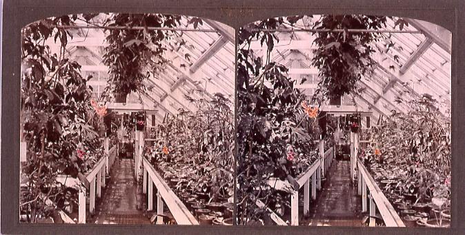 作品画像:東京植物園(小石川植物園)温室内(No.23)