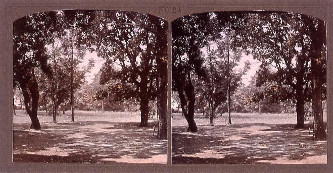 作品画像:東京植物園(小石川植物園)(No.24)