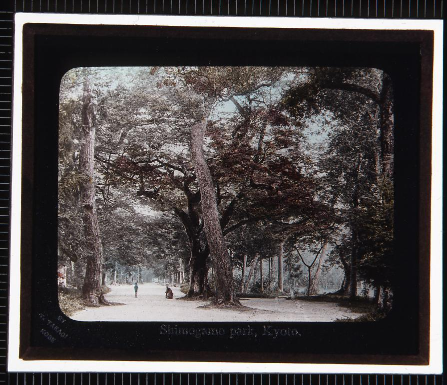 作品画像:京都 下賀茂神社糺の森(幻灯原板)
