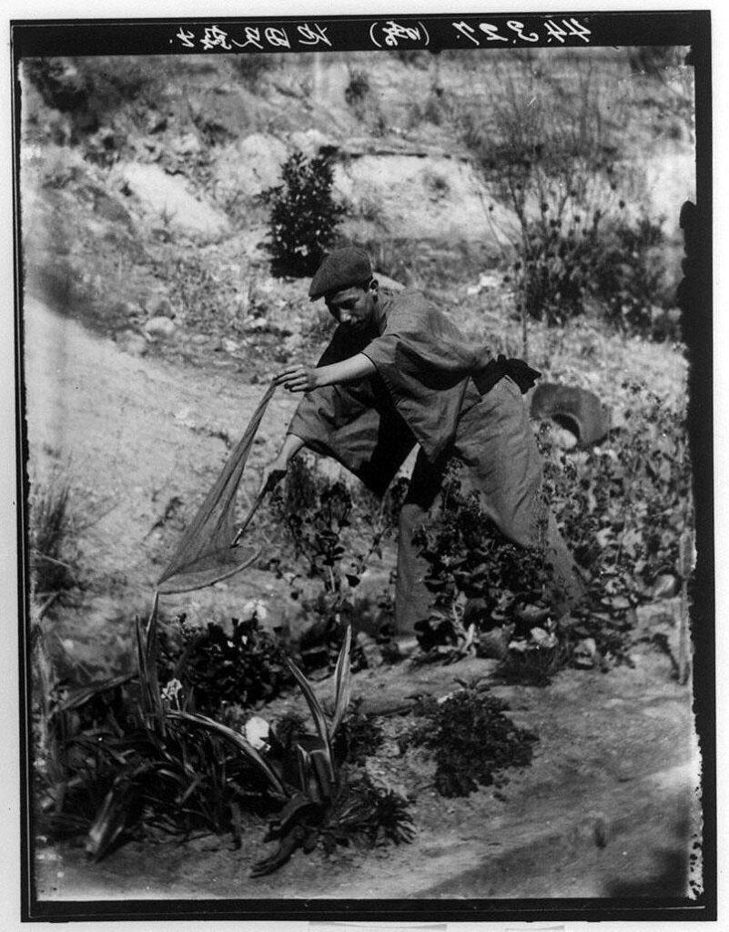 作品画像:昆虫採集をする男性