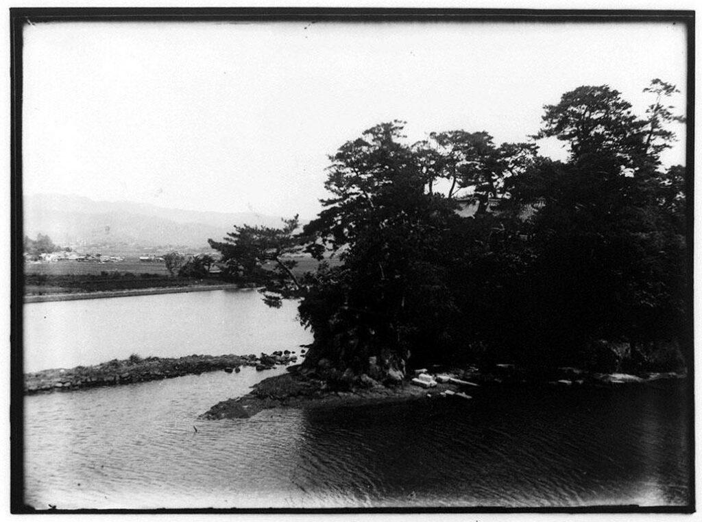 作品画像:水辺の松林