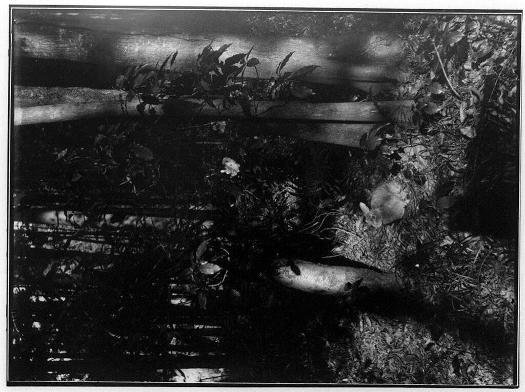 作品画像:林の中のうさぎ
